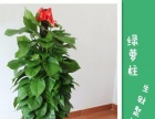 中海国际 商会大厦 银座 乐客城绿植租摆