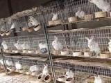 12位商品兔笼 (食盒自动饮水器)