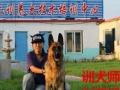 状元驯养犬基地