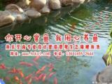 宣城锦鲤鱼池景观设计建造 鱼池净化工程 锦鲤鱼