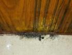 灭蟑螂、白蚁等四害,服务上门。