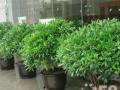 单位花卉绿植租摆 立体绿化 屋顶绿化 绿化养护