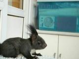 金花松鼠幼崽,魔王松鼠幼崽