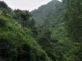 低价转让丽水市200亩林地