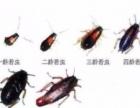 较除蟑螂 无色无味 绿色环保 质保一年 无效退款