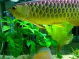 清洗鱼缸鱼缸维护专业治疗鱼病鱼缸造景维修