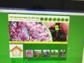 平南金泉网络科技有限公司