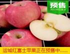 山西红富士苹果哪家好-则花果园欢迎您