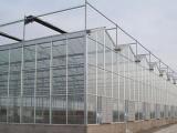 连栋薄膜温室工程-口碑好的温室大棚哪里有