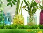 襄阳襄樊晶点玻璃水晶花瓶本地厂家直供大型批发优惠促销售有保证