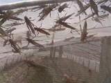 茂伦新料生产蝗虫养殖网抗氧化聚乙烯蚂蚱养殖网棚