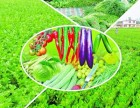郑州市金水区蔬菜,生鲜送货上门