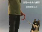 宁波宠物犬行为纠正训练培训学校训犬训狗基地哪家好