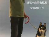 湖州寵物犬行為糾正訓練培訓學校訓犬訓狗基地哪家好
