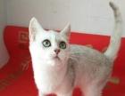 本人有多只猫咪出售大猫小猫都有随时看猫价格美丽