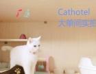 高品质大眼睛 甜美可人加菲猫 幼猫热销中