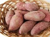德阳红薯种薯甘薯 龙薯9号红薯大量批发 西农431