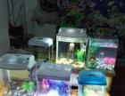 水族馆门面到期亏本出售 小鱼缸等一切物品