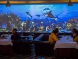 南宁市光影餐厅墙体装修餐饮5D投影墙体装饰网红艺术动态墙体
