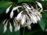 科博农业白芨种植加盟