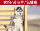 佛山哪里能买到健康的哈士奇犬 佛山CKU认证犬舍 宠之恋犬舍