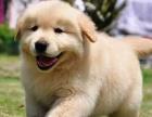 狗场解散,出售各界各种名犬全国包邮签协议包健康