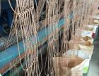 养殖网紫菜网海苔养殖网网绳
