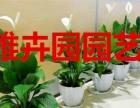 南京专业花卉出租公司 绿植养护