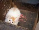 西安人都到哪里去买加菲猫 西安较便宜加菲猫价格