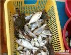 深圳海边游艇出海捕鱼兜风海滩游玩