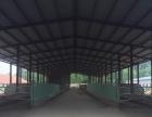 历城区董家柿子园奶牛场77亩厂区15000平米棚