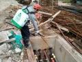 东莞白蚁防治 专业家庭白蚁预防 防治 白蚁预防工程