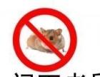 专业家庭、酒店、饭店、工厂灭鼠灭蟑螂灭蚂蚁杀虫