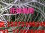 泰州托邦绳网厂家直销,质优价廉