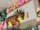 狗狗殡葬服务