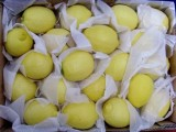四川安岳柠檬 黄柠檬 一级中果批发 零售