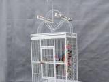 鹦鹉用品,鹦鹉医疗,桌山宠物