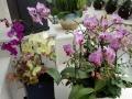 玫瑰花束,开业花篮,婚庆用花,绿色植物,盆景租赁