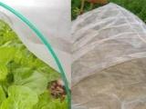 交城县种植蔬菜大棚成农户绿色银行