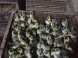 生态养殖降低养殖成本 一举多得 免费提供养殖技术