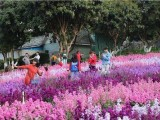广东周边公司出游有趣味运动会项目东莞松山湖