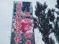 新乡封丘洛寨绿色庄园,玫瑰香葡萄采摘正当时。