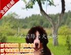 宠物狗 纯种伯恩山幼犬 视频看狗 免费送货上门