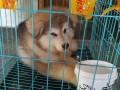 潍坊宠物托运 宠物速运 宠物出国 价格低