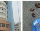 芜湖安帮 专业高效灭鼠,除蟑螂、白蚁、跳蚤,除四害