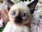 平价宠物猫咪出售