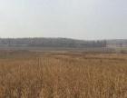 黑龙江哈尔滨市巴彦县750亩旱地出租