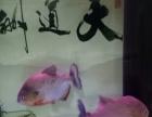 漂亮个性的观赏鱼