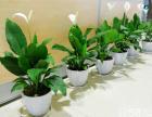 南京雅卉园园艺大量出售花卉绿植