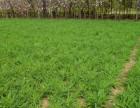 北京草坪施工优惠预订多种风格组合 满足您的个性需求